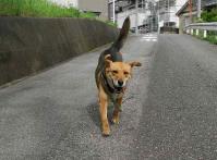 散歩20100629-2