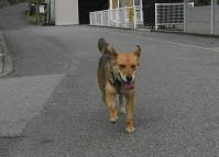 散歩20100629-3