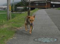 散歩20100629-4