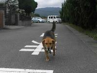 散歩20100630-1