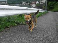 散歩20100630-2