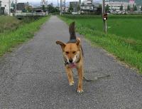 散歩20100630-5