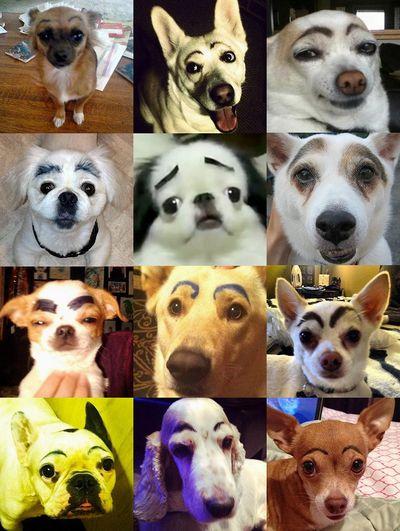 世界のまゆげ犬