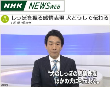 NHK NEWS WEB「しっぽを振る感情表現 犬どうしで伝わる」