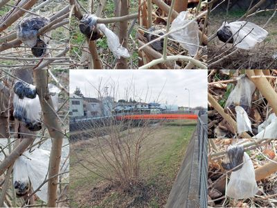 空堀川河川敷のうんこツリー