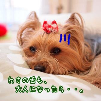 1_20110520194038.jpg