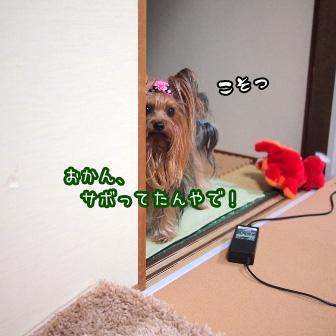 1_20110531182720.jpg