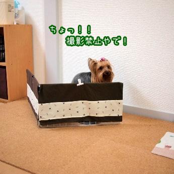 1_20110601185611.jpg