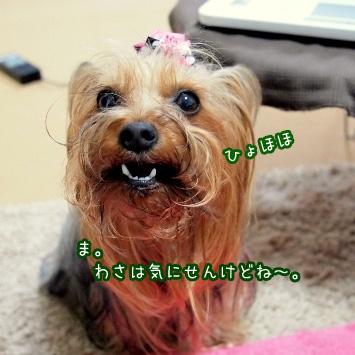 2_20110527192151.jpg
