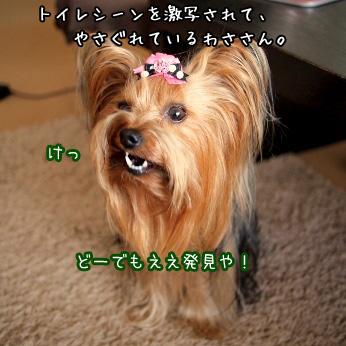 2_20110601185610.jpg