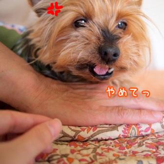 5_20110520194037.jpg
