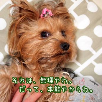 5_20110601185610.jpg