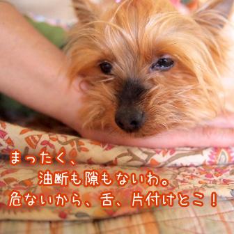6_20110520194037.jpg