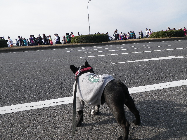 2011.1.23 千葉マリンマラソン 003