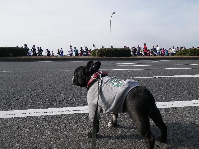 2011.1.23 千葉マリンマラソン 004