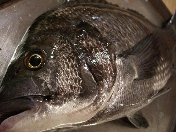 沖釣り天然黒鯛