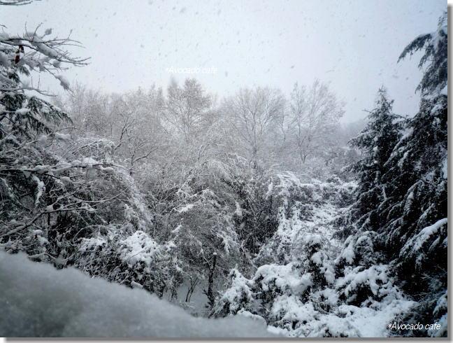 雪景色pm2