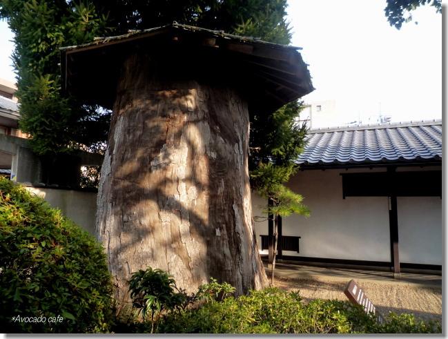 彫刻用原木(楠木)