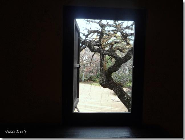 窓から梅の木