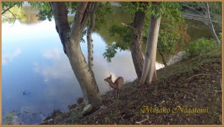 鹿のいる池のほとり