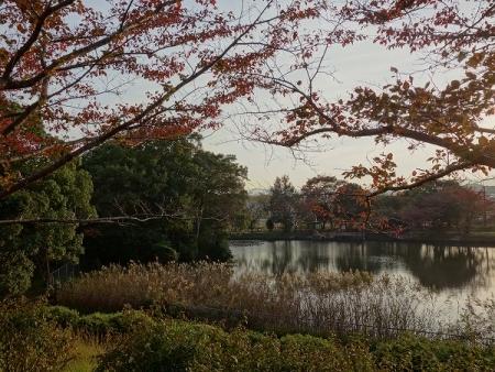 近所の公園3