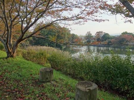 近所の公園5