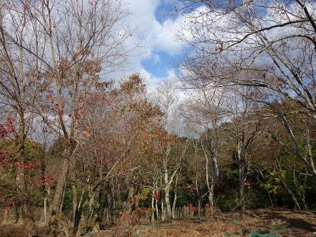 高畑の雑木林