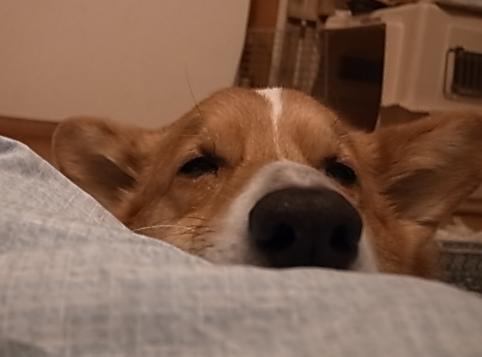寝てたのに2