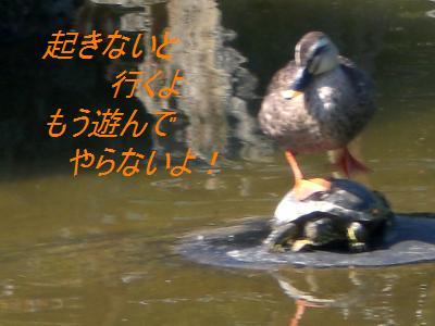 亀と鴨まる2