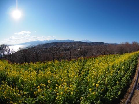 吾妻山公園 パノラマ