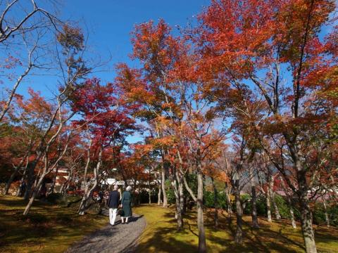 箱根美術館 紅葉