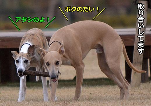 0101-2-1_20120128181119.jpg