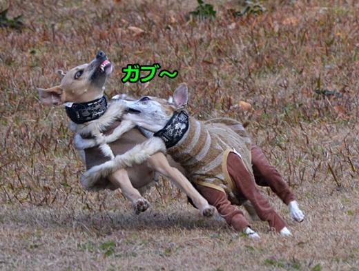 0104-1_20120201023127.jpg