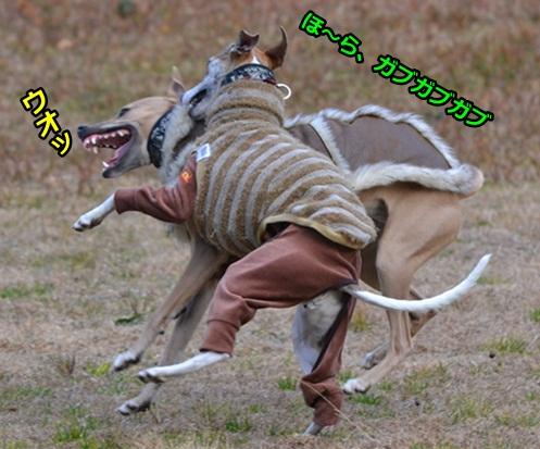 0104-2_20120201023127.jpg