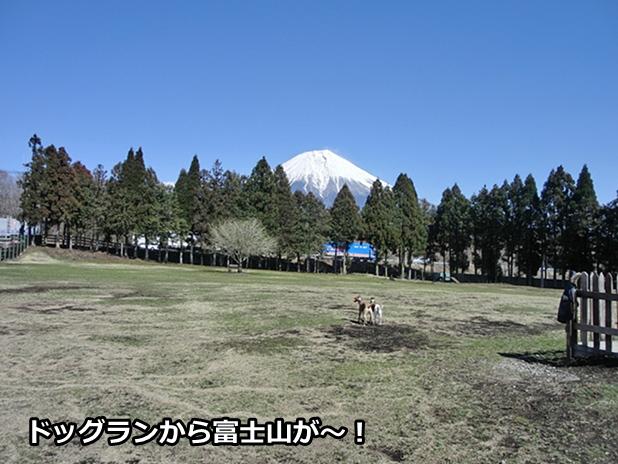 20120404-9.jpg