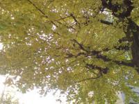 黄葉の途中