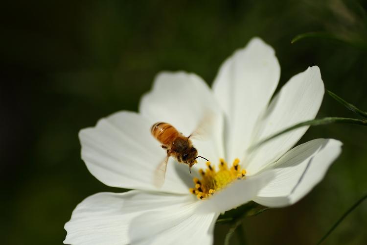 花壇への台風の影響大10