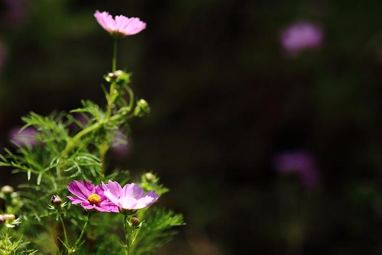花壇への台風の影響大07