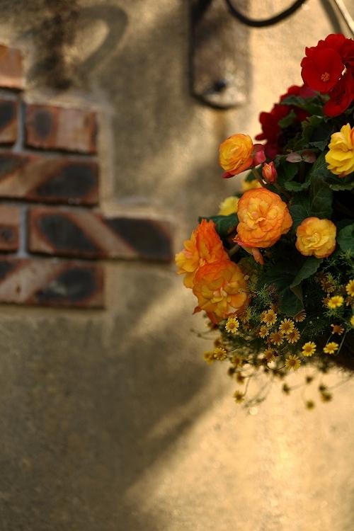 秋バラ撮影は最初で最後かな16
