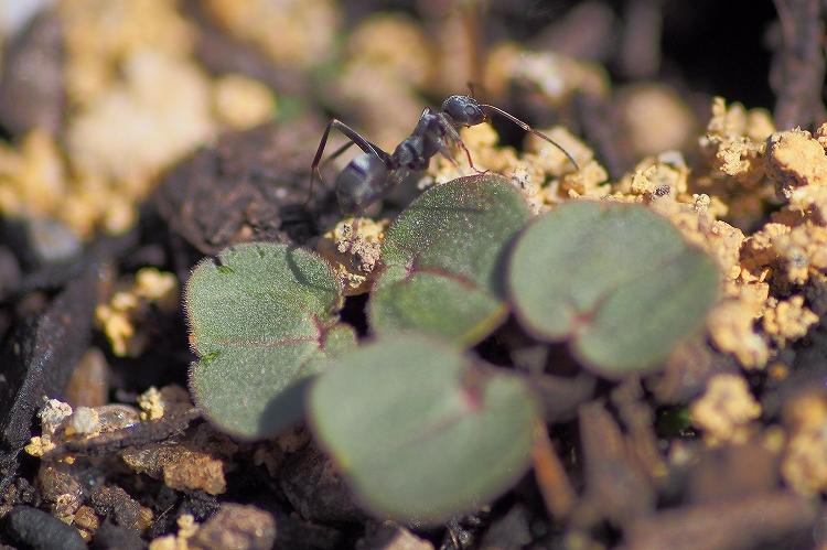 pen5蟻マクロ12