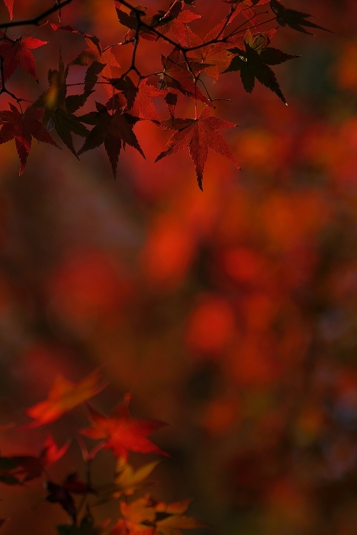 東山紅葉スタート02
