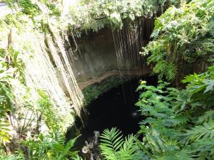 自然に出来た泉〝セノーテ〟