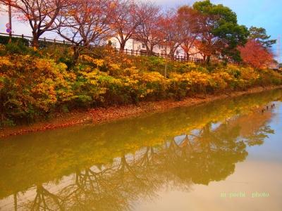 公園の紅葉2