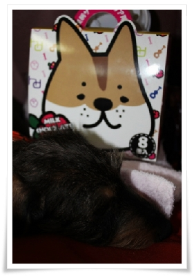 Sleeping_Boucle_2011_10