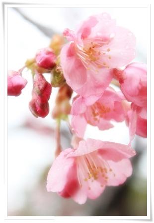 sakura2_2012_0318