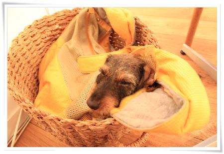 boucle_sleeping_2012_0318
