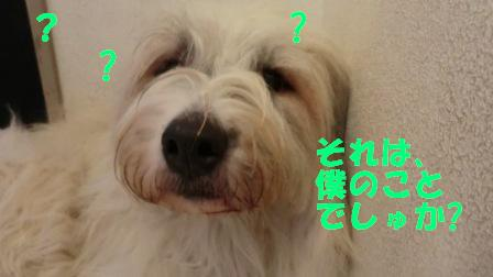 CIMG0746.jpg