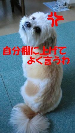 CIMG1047.jpg