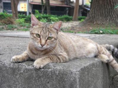 2011.4台湾109