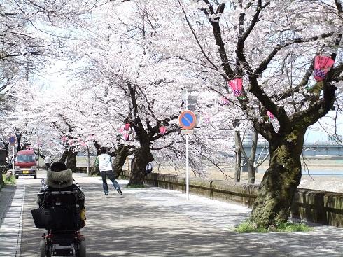 *桜の中を散歩*